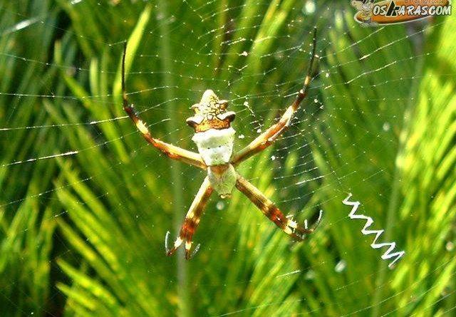 fotos aranha