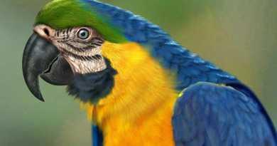 foto papagaio arara