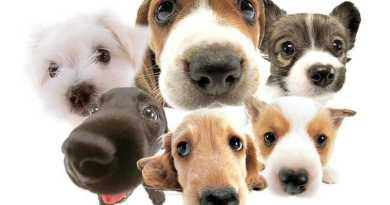 fotos caes cachorros