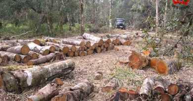 desmatamento-urbano