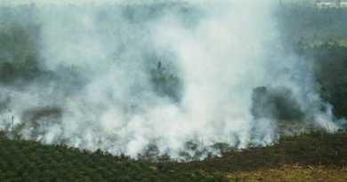 queima_florestas
