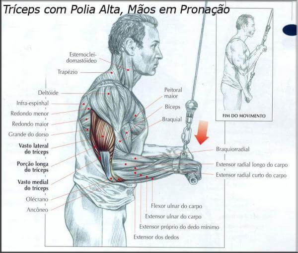Triceps com polia alta, mãos em pronação