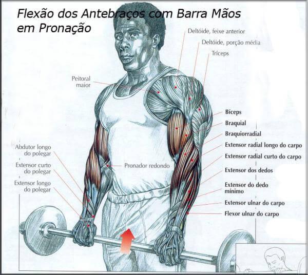 Flexão dos antebraços com barra mãos em pronação
