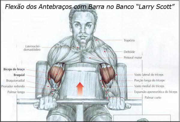 """Flexão dos antebraços com Barra no Banco """"Larry Scott"""""""