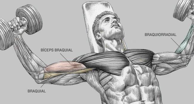 biceps- (8)