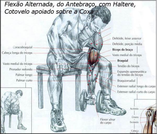 biceps- (9)