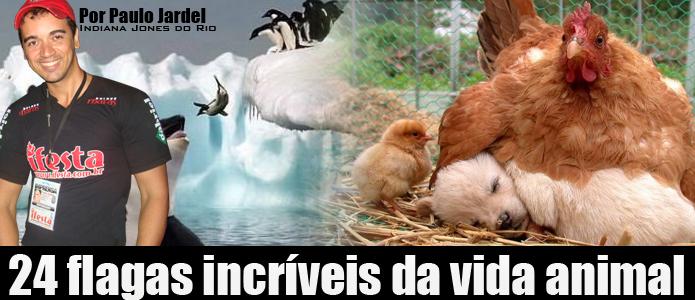 fotos_animais