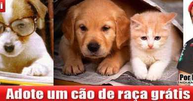 adocao_caes