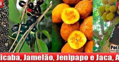 frutas_que_curam
