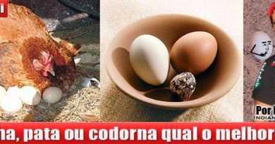 galinha-codorna-pata