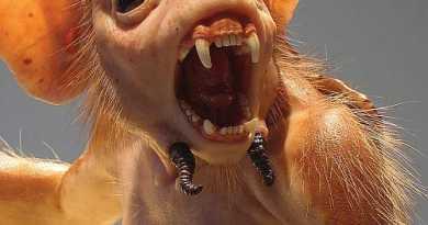 criaturas-assustadoras