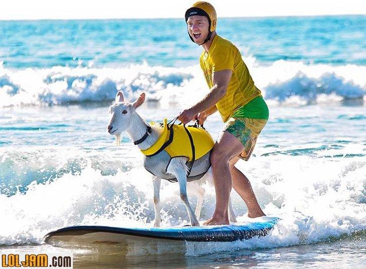 Bode Surfista