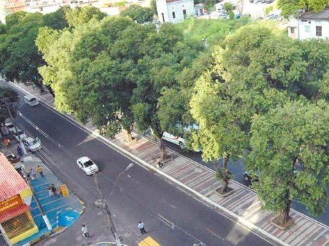 Avenida-Getulio-Prefeitura-Manaus-Mendes-arvores-clima-meio_ambiente-tempo_ACRIMA20100708_0009_17