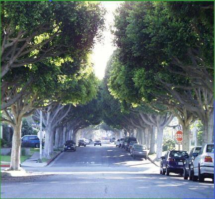 Benefícios da árvores