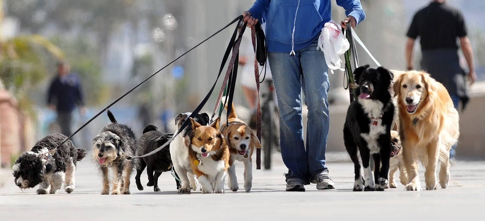 passeando com cães