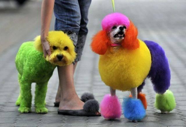 """Ganhando dinheiro passeando com cães!  """"Dog Walkers"""""""