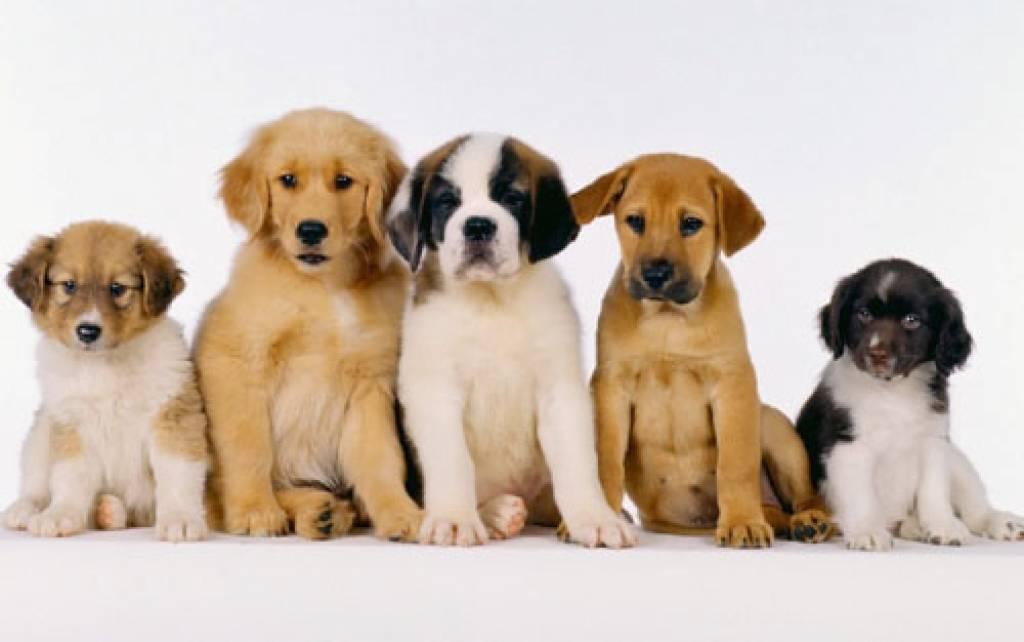 adocao_animais