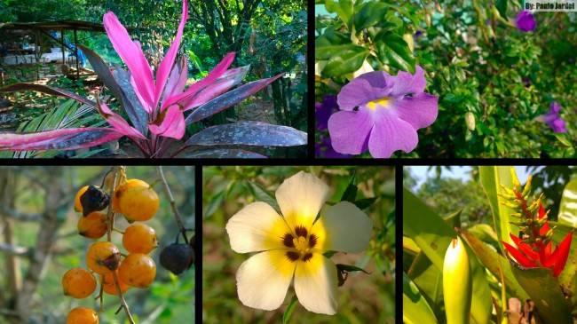 flores_angra_dos_reis