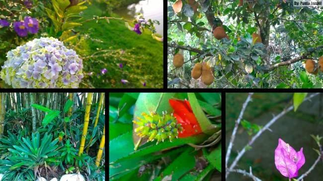 flores_nativas_brasil